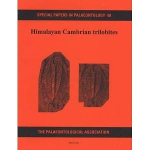 Product - 058 Himalayan Cambrian trilobites.  Image