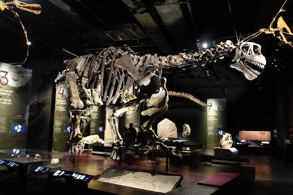 Camarasaurus - Musee_des_Confluences - Lyon