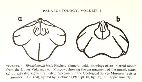 PalAss at 60 - Volume 1 Text Fig 4