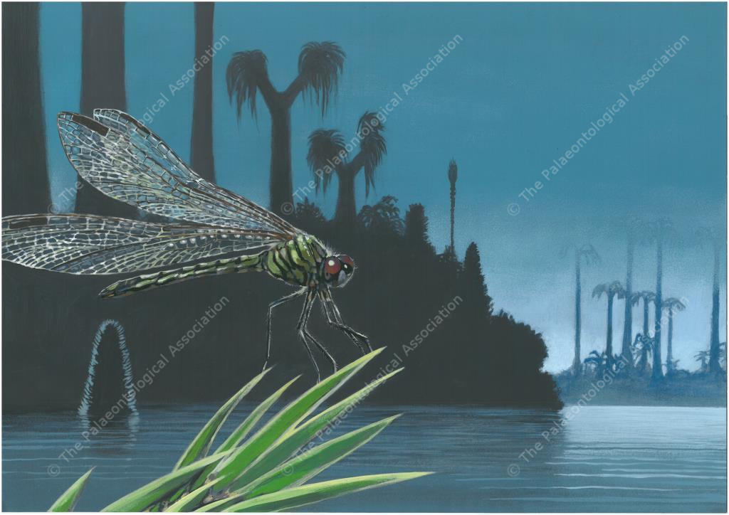 Postcard #2 - Carboniferous, Bolsover, Derbyshire