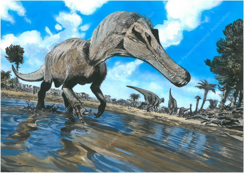 Postcard #4 - Cretaceous, Weald, southern England