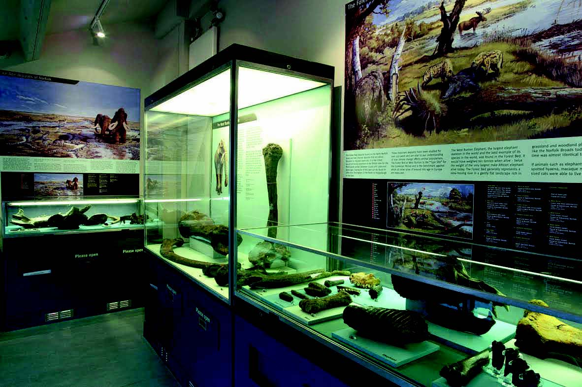 The geology gallery at Cromer Museum