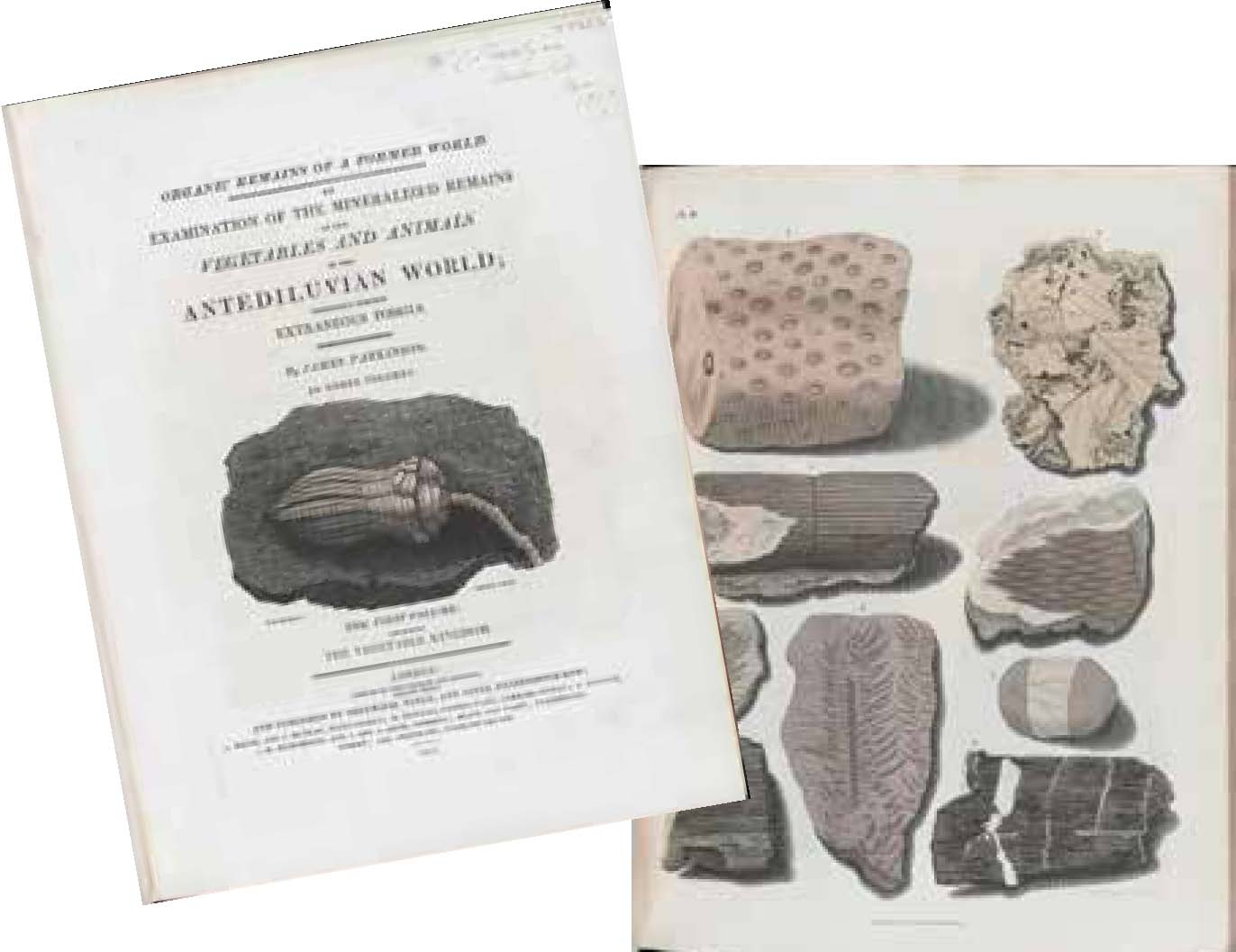 Images of pages from Organic Remains