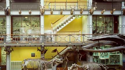 The Natural History's 'cabinet-style' building