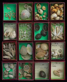 Historical collection of shells.
