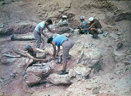 Gobi excavation uncovering a large sauropod